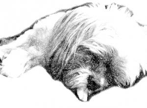 Heidi Sleeping